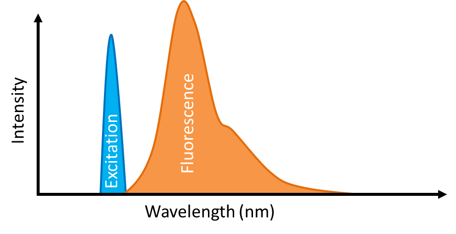 Fluorescence Spectroscopy peaks