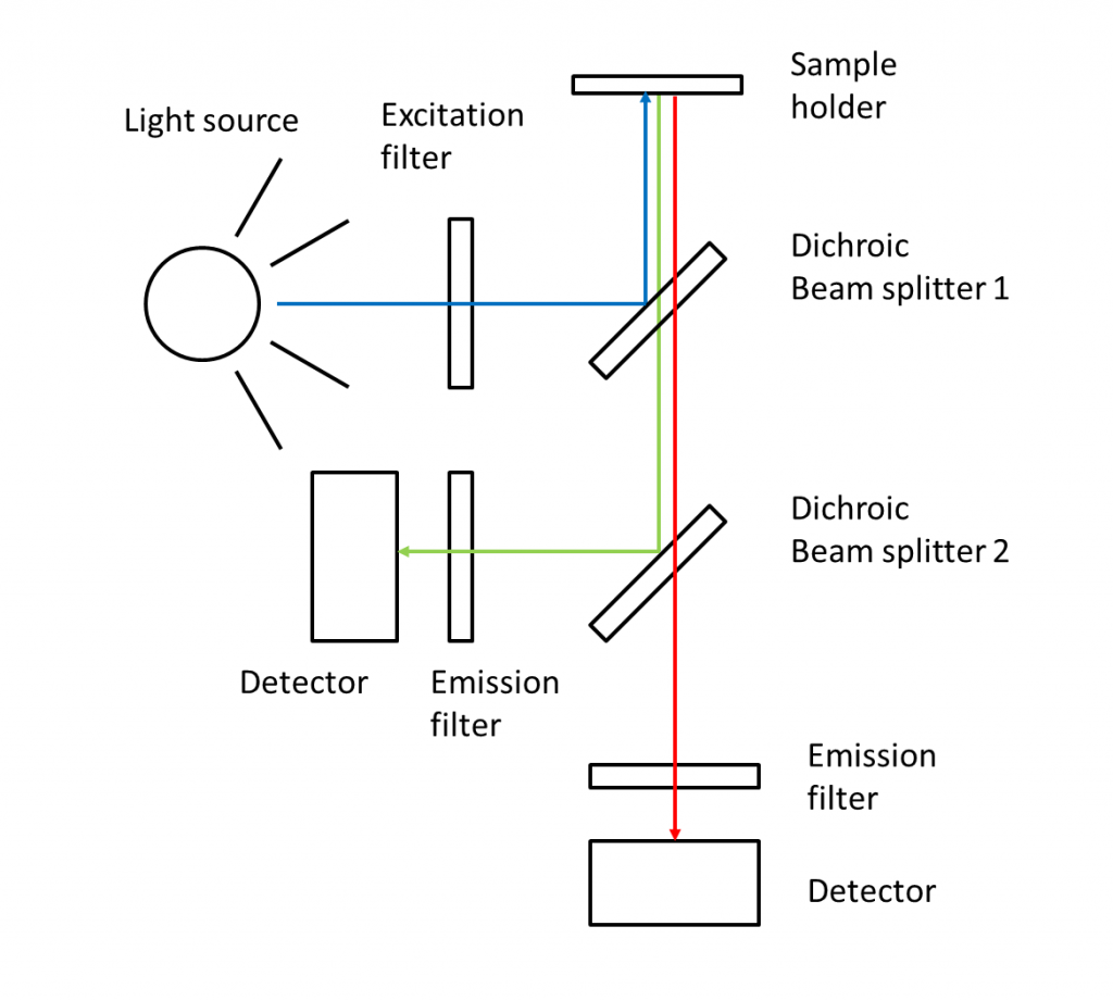 Fluorometer with two filters